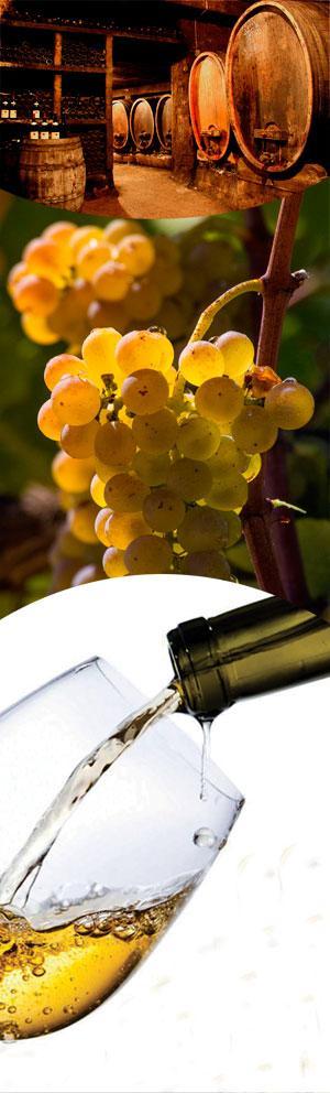 Bande droite vigneron 2