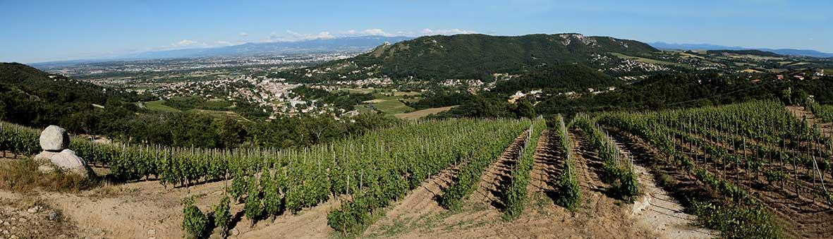 Panorama vigne crussol